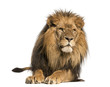 Front view of a Lion lying, Panthera Leo, 10 years old, isolated - 58808774