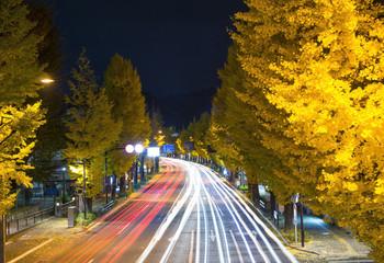 いちょう並木 夜景
