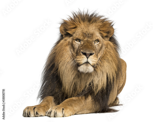 Lion lying down, facing, Panthera Leo, 10 years old, isolated
