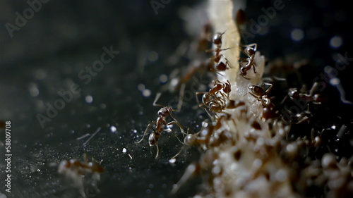 Army of Ants Eating