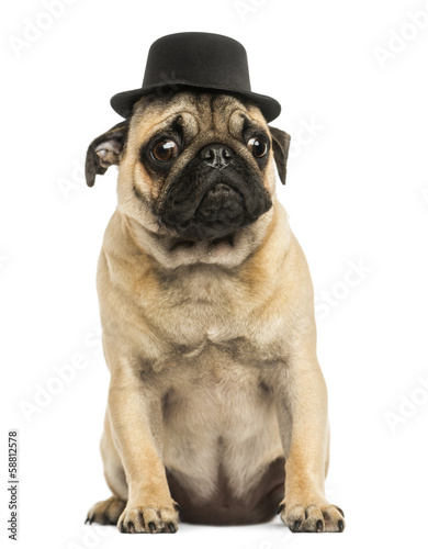 Front view of a Pug puppy wearing a top hat, sitting