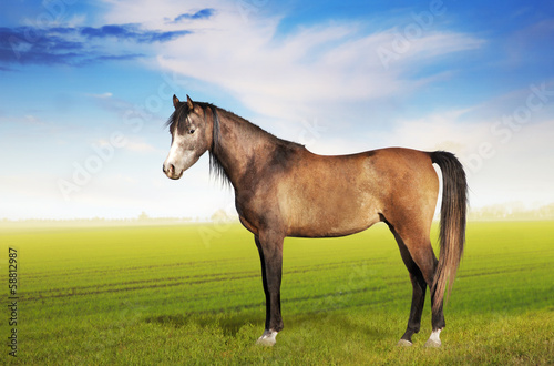 Horse standing on field against morning