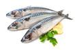 Mackerel Fish - 58814374