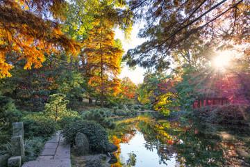 Fall Foliage in Texas