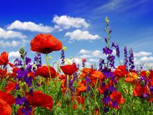 Zomerwildflowers en wolken