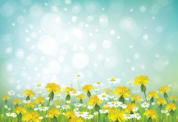 Vector spring background with chamomiles and dandelions.