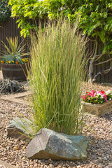 Ornamental grass in a gravel bed and rockery