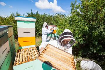 Beekeepers Working In Apiary
