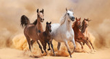 Horses in sand dust - 58821374