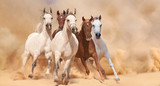 Horses in sand dust - 58821383