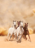 Horses in sand dust - 58821391
