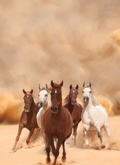 Horses in sand dust