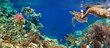 Leinwandbild Motiv Underwater panorama in a coral reef with colorful sealife