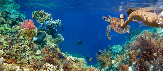Underwater panorama in a coral reef with colorful sealife