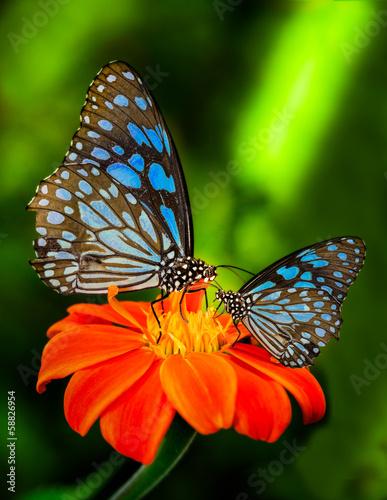 Staande foto Vlinder Blue butterfly