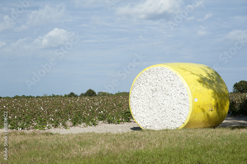 Round bales of cotton northern Florida USA