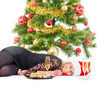 Woman with gift, glass of wine, sushi and christmas tree