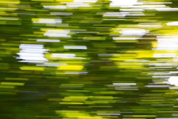 Motion blurred foliage