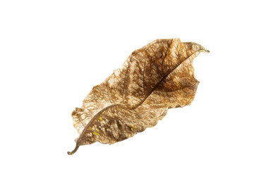 Dry leaf bend