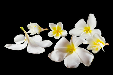 Group of Plumeria
