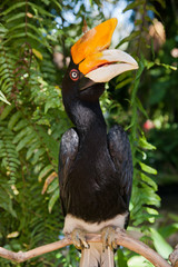 Hornbill bird on branch