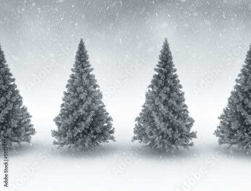 Winter scene pine trees