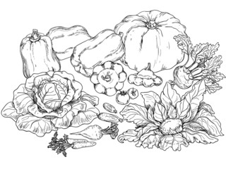 outlines of various vegetables