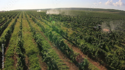 Tractors poured grape field