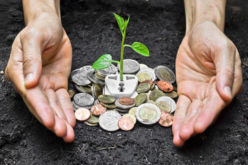 hands holding and caring a tree growing on a socket with coins