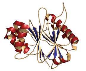 Recombinant DNase I DNA cutting enzyme (dornase alfa)