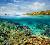 Coral reef on the island of Menjangan. Indonesia