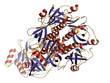 Thyphoid toxin protein. Toxin produced by Salmonella typhi