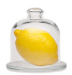 Fresh lemon in a glass dome