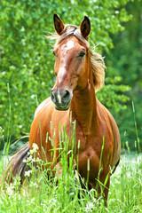 Portrait of running horse in summer