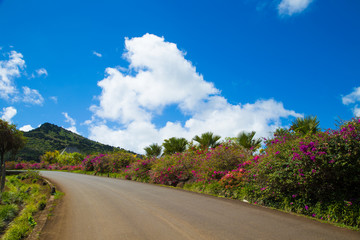 Road with colorful flowers on flowering bush