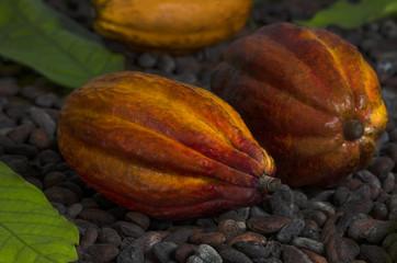 Einige Kakaoschoten liegen auf Kakaobohnen