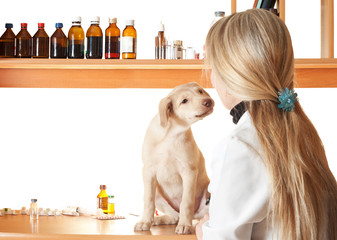 familiarity puppy and vet