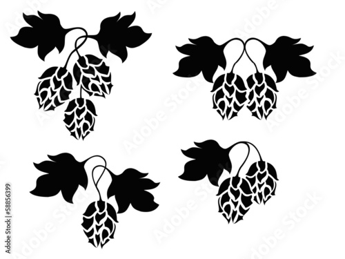 Hops vector design