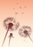 vector dandelions in sepia with flying seeds - 58859543