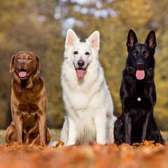 3 Hunde im Quadrat