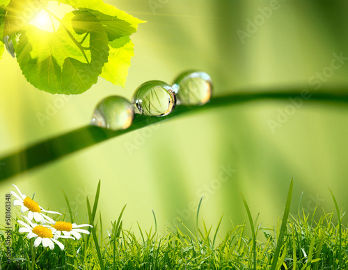 Leinwanddruck Bild morning nature background with beautiful drop
