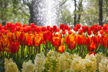 Arrangement of tulips and hyacinth with water fountain
