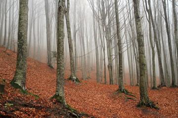 foresta del casentino