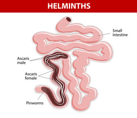 Helminths on Small intestine