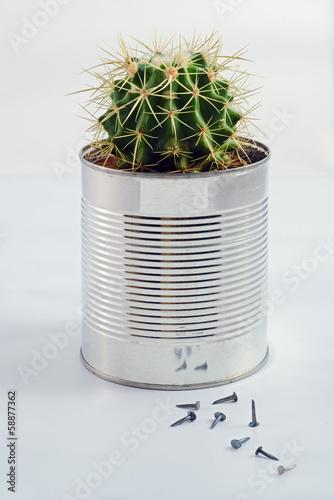 In de dag Cactus Cactus in a can