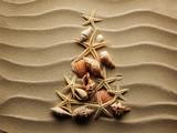 Fototapety Sea shell on sand