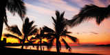 Palms silhouettes on a tropical beach at sunset
