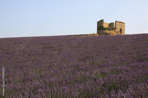 France, Lavender field and farm