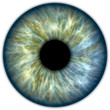 Blue green iris - 58889508
