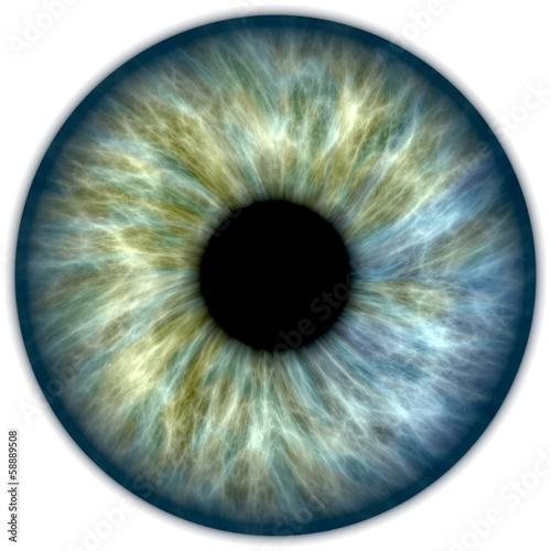 Blue green iris